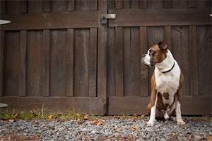 Фото - собака в частном доме