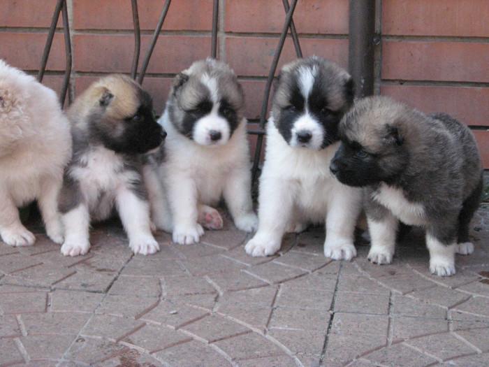 Фото - очаровательные щенки
