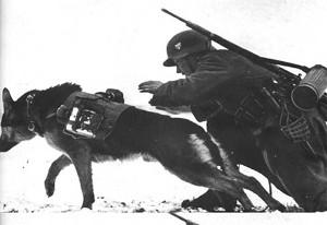 Фото - собаки на войне