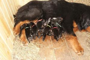 Фото - как кормить собаку