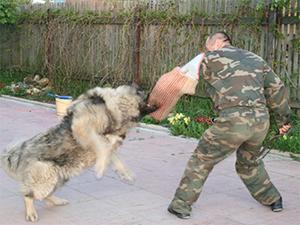 Фото - собака-охранник