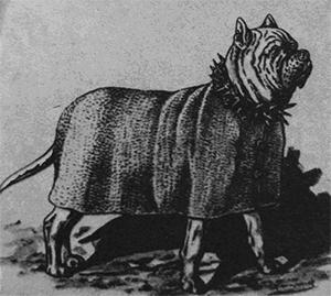 Фото - римская собака