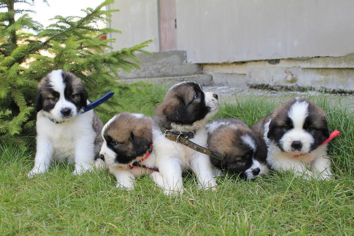 Фото - щенки на прогулке