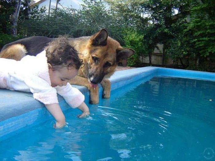 Фото - немецкая овчарка с ребенком