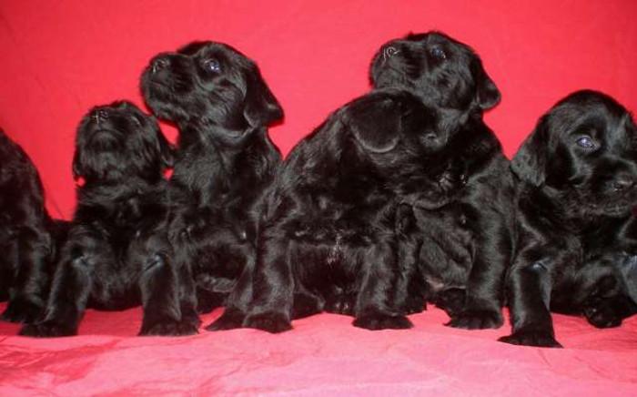 Фото - щенки 1 месяц