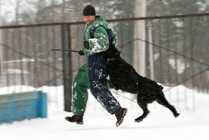 Фото - дрессировка собаки