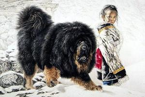 История тибетского мастифа